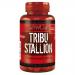 ActivLab - Tribu Stallion - 60cap